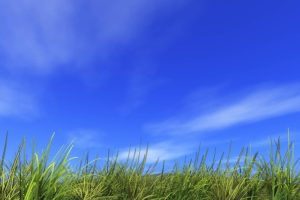 手相占い!ららぽーと湘南平塚の鈴木水産が好き!平塚名物も紹介/手相占い平塚、小田原、茅ヶ崎、藤沢、辻堂、海老名