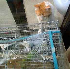 手相占い平塚 野良猫とセキセイインコ