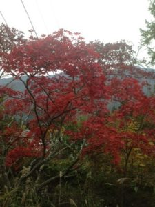 三峰神社 紅葉