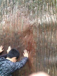 三峰神社 ご神木 風景